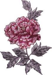 Applikation Rose