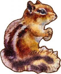 Applikation Eichhörnchen