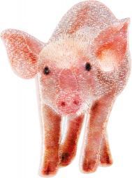 Application piglet