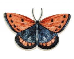 Applikation Schmetterling rot blau