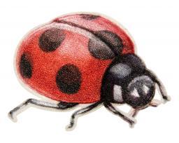 Motif Lady Bug