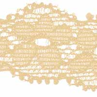 Perlon Lace 18mm, 4028752470236