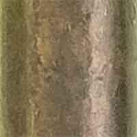 Leiterschnallen 20mm, 4028752140962